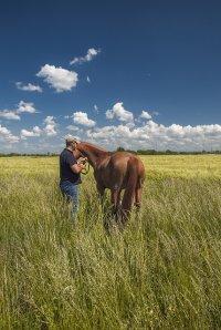 opieka nad koniem
