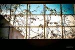 okno i szkło